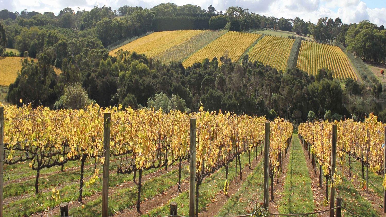 Montalto Vineyard