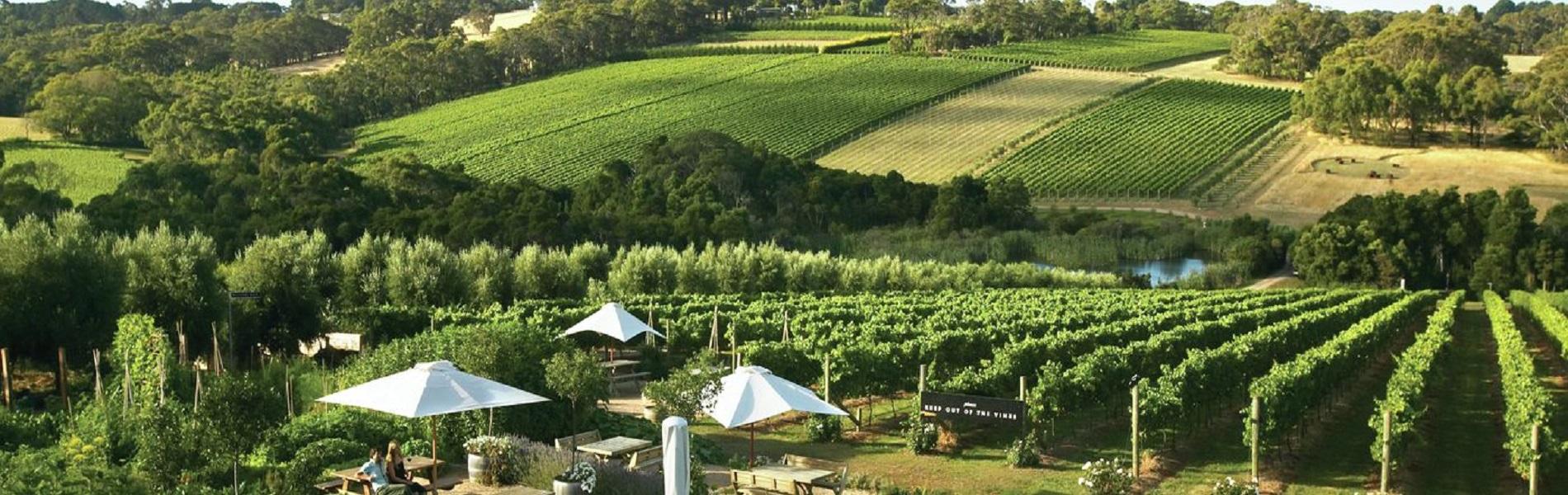 Mornington Valley Wine Tours